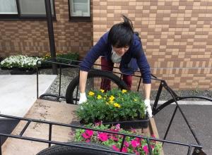 台車から苗を運びます